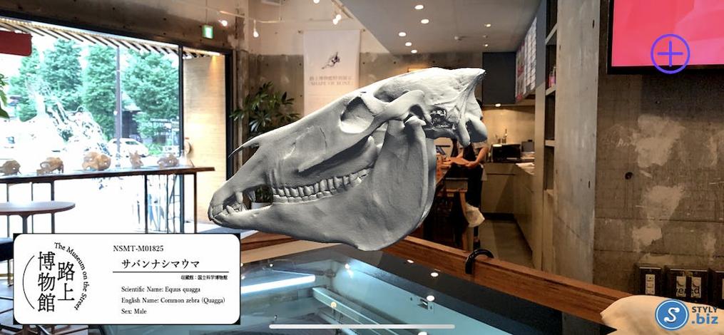 STYLY.bizによるAR骨格標本の実現